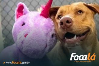cachorro com unicórnio – Foto: Freepik